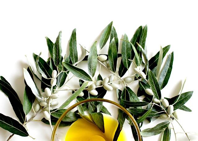 oliwa z oliwek do włosów