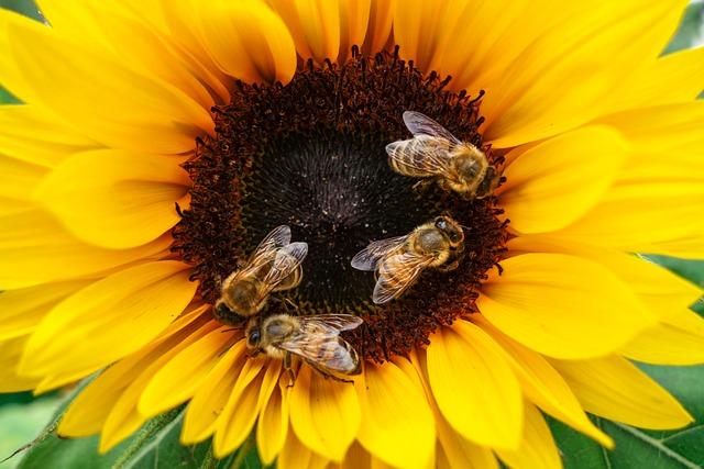 miód na włosy, pszczoły